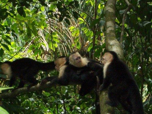 monkey monkeys everywhere.jpg