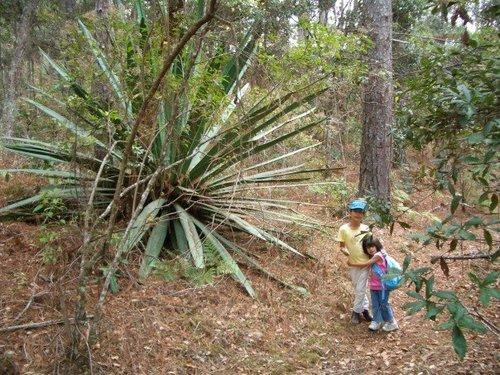 the biggest cactus ever.jpg